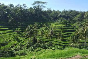 Bali_IMG_0407_THUMB